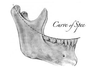 Curve of Spee
